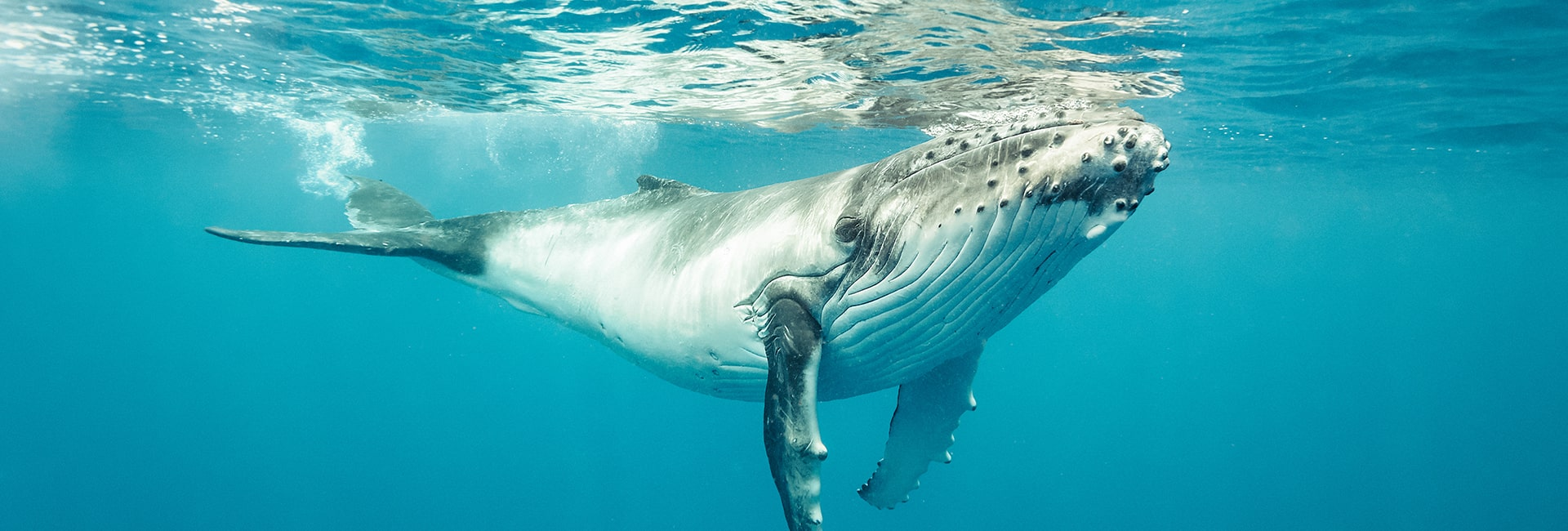 Best Time To See Whale Sharks In Cabo San Lucas