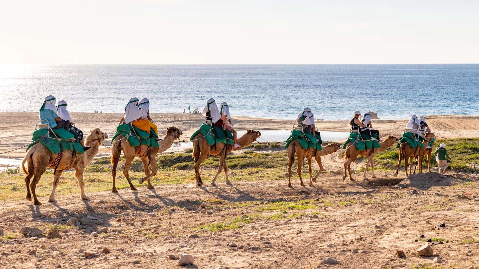 Camel Ride Cabo