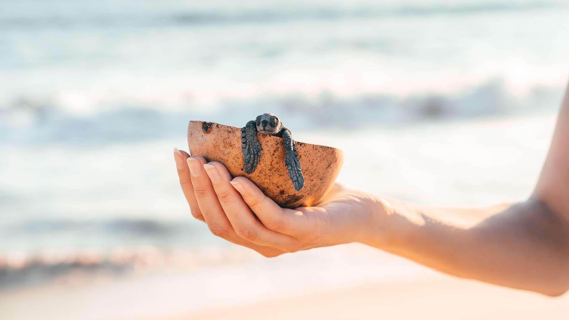Sea Turtle Hatching Season