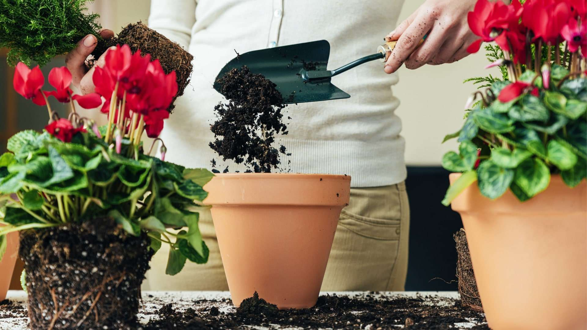 How To Fertilize Plants