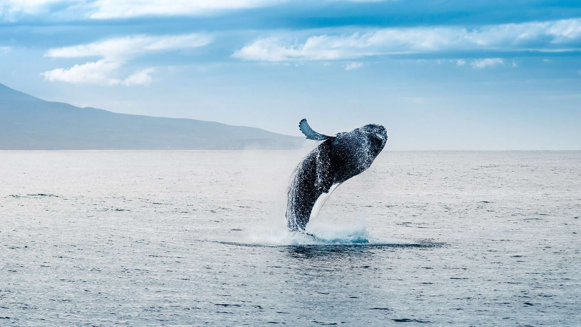 Whale Watching Season