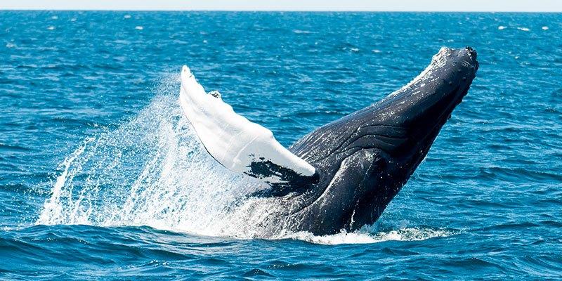 Whale Watching Villa La Estancia Cabo San Lucas